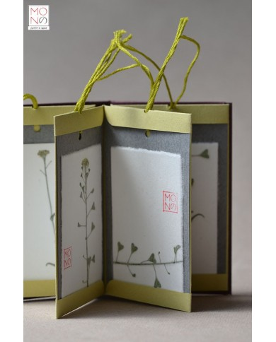 Botanical Book Tag - Capsella