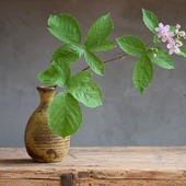 Girandole...  #fioridimoraselvatica #fioridimora #blackberryblossom #wildherbs #wildflowers #japanceramics #japanesepottery #madeinjapan #japanstyle #monoarte