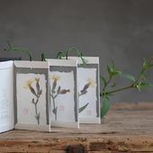 Nuova erba nuovo erbario... Bacellobook: Silene latifolia  Struttura contenitiva a concertina ideata da@cibidia@professionelibro  #erbario#herbarium#herbier  #erbedicampo#erbespontanee #erbeselvatiche#野の花 #wildherbs #herbesfolles#fiorispontanei #flowers #silenelatifolia #silenealba #handemadebooks #handmade#bacellobook #leporello#concertina #concertinabook#accordionbook #fattoamano #fattoamanoconcura #monoarte