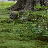 Haiku della domenica...  Muschio dell'eremo che non conosce lo spuntar dei fiori  Io no koke hana saku sube mo schiranu ya  Kobayashi Issa (1763-1828)  Sanzen-in, Ōhara, Kyoto 📷 Monoarte photo credit  #haiku #俳句 #poetry  #japanesepoem#kobayashiissa#小林一茶#sanzenin#三千院#ohara_temple#kyoto#japanesetemple#japanese_gardens #koke #moss#苔#authenticjapan#japan#zen #monoarte