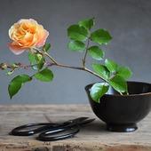 Sfumature...  #urushi #japaneselaquer #japanese_lacquer_bowl #madeinjapan #rosa #roseflower #バラ #花のある暮らし #季節の花 #monoarte