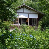 Haiku della domenica...  Sugli shōji l'ombra azzurra di un'ortensia  ajisai no aoki kage sasu shōji kana  Tokihiko Kusama(1920-2003)  Sanzen-in temple, ajisai-en garden (Hydrangea garden), Ōhara, Kyoto monoarte photo credit  #haiku# 俳句#poetry#japanesepoem#tokihikokusama#sanzenintemple #三千院#ohara_temple#kyoto#japanesetemple#japanesegarden#アジサイ#紫陽花#hydrangeamacrophylla#hydrangea#ajisai#hydrangealover#blueflowers#japan#季節の花#fioridistagione #authenticjapan#monoarte